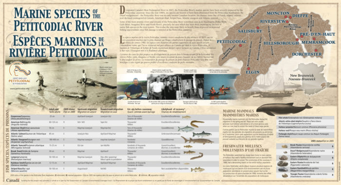 Espèces marines / Marine Species (Sentinelles Petitcodiac Riverkeeper)